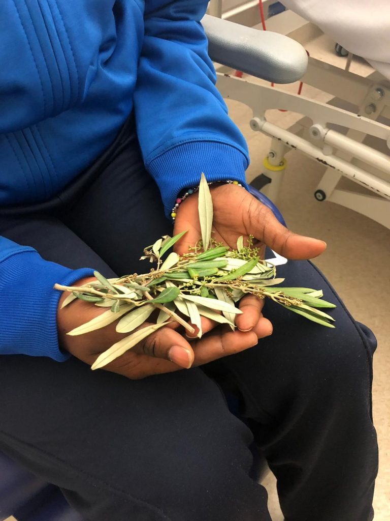 Hospital visit with olive leaves